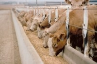 Tyson wins nearly $1 million in cattle feeding lawsuit